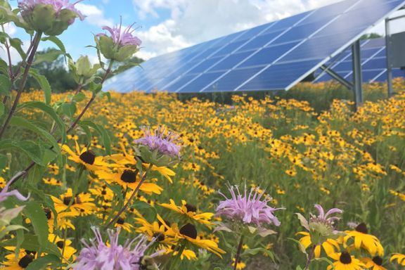 Solar array with flowers in foreground